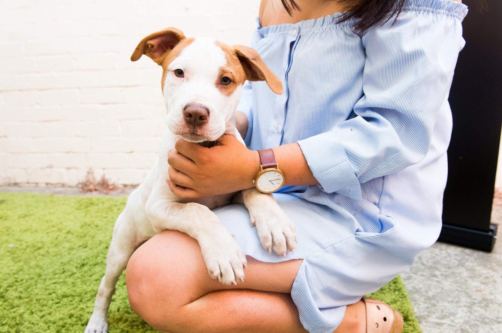 6 enfermedades más comunes en perros y cómo prevenirlas
