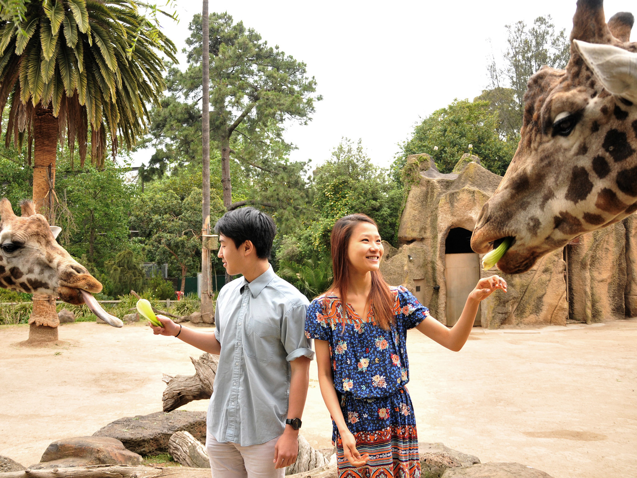 Pose for a portrait with a giraffe