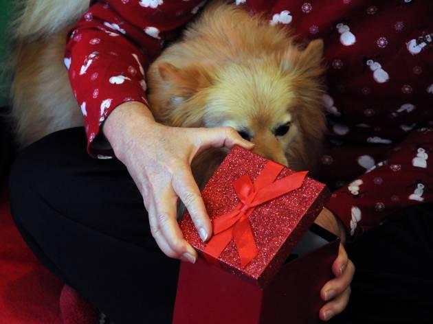 반려동물을 위한 아주 특별한 선물