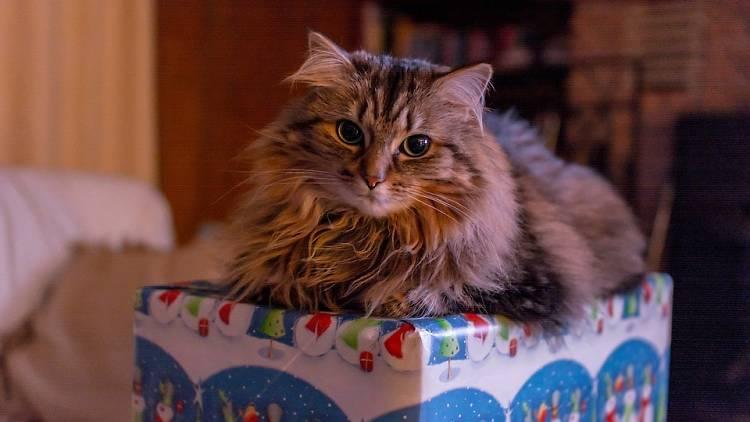 pet present