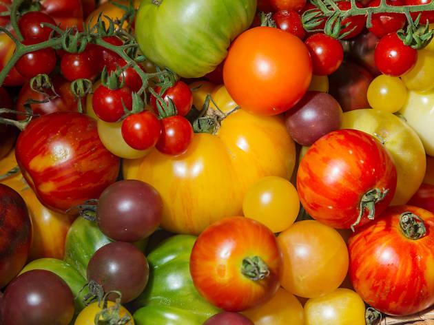 Tomato Festival Sydney