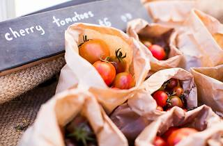Tomatoes at Melbourne Tomato Festival