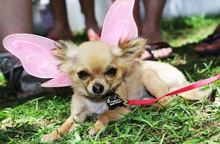 Mardi Gras Fair Day
