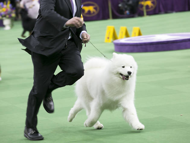 Everything you need to know about the Westminster Dog Show