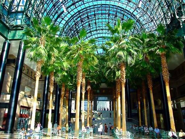 watch free movies under palm trees at brookfield placeu0027s indoor atrium