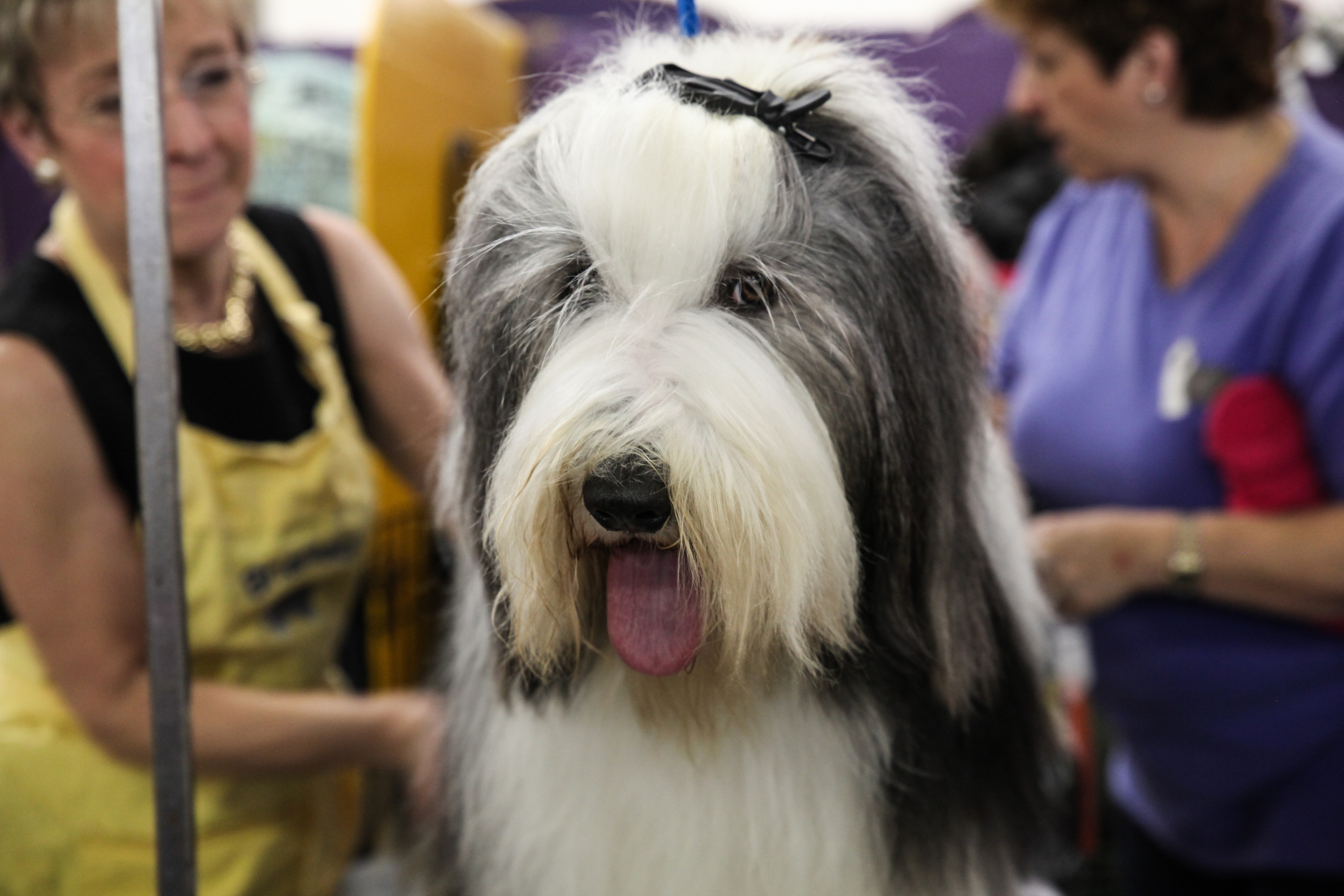 Chicago Pet Show