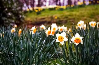 Springtime in the Gardens