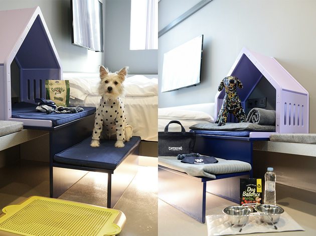 Why leave your best buddy at home? Find Seoul's pet-friendly hotels