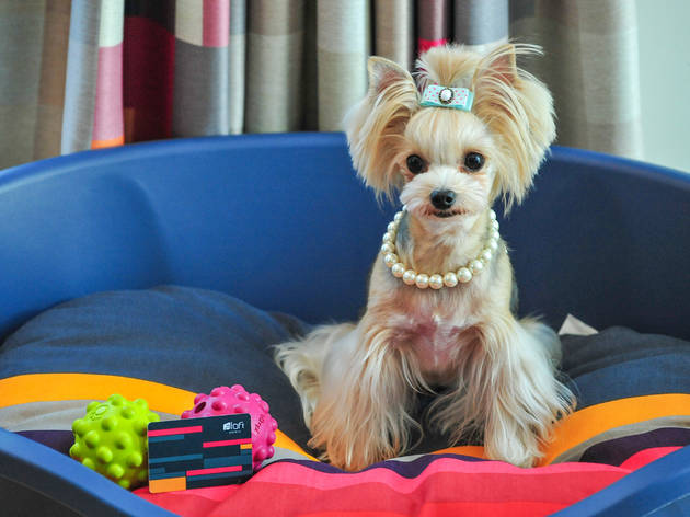 ARF (Animals Are Fun) Program @ Aloft Hotel Seoul Gangnam