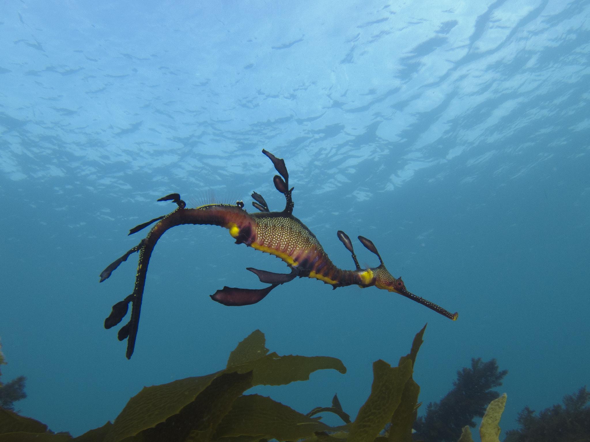 Seadragon's Lair