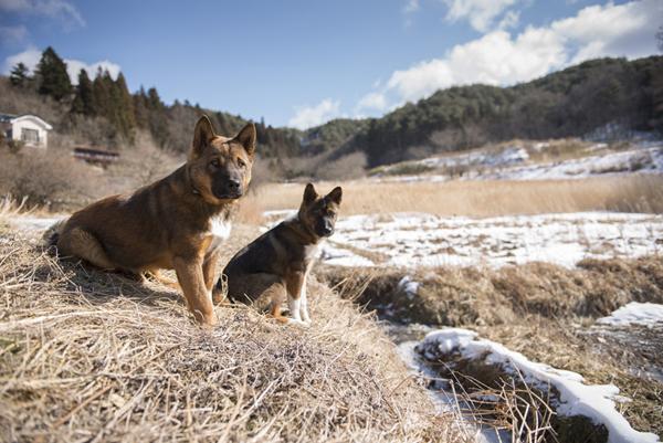 山村地帯にある飯舘村で生きる犬