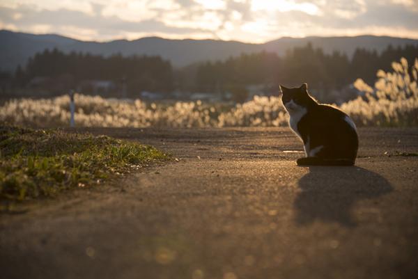人が消えた村に佇む猫