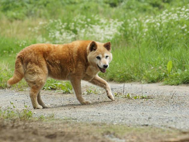 日比が撮影した老犬チビ