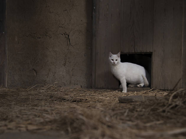 日比がTNRした母子猫の内の1匹。人と触れ合わずに育つ子猫は警戒心が強い