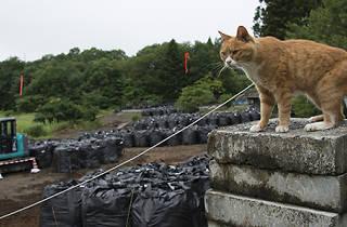 出口は見えない-飯舘村の人と犬猫の今