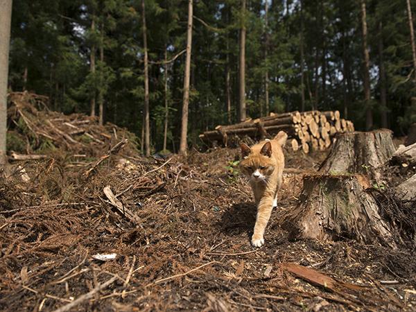 家屋近隣の森の伐採現場。以前はマメの遊び場だった。
