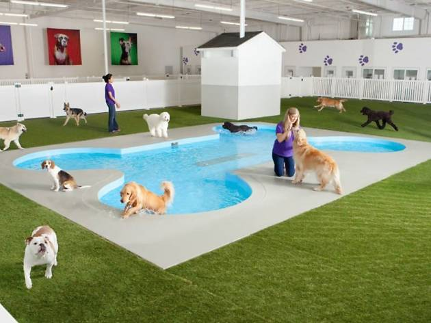 A new terminal just for animals has opened at JFK