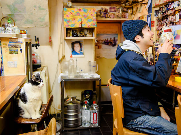 看板猫と一杯やる。