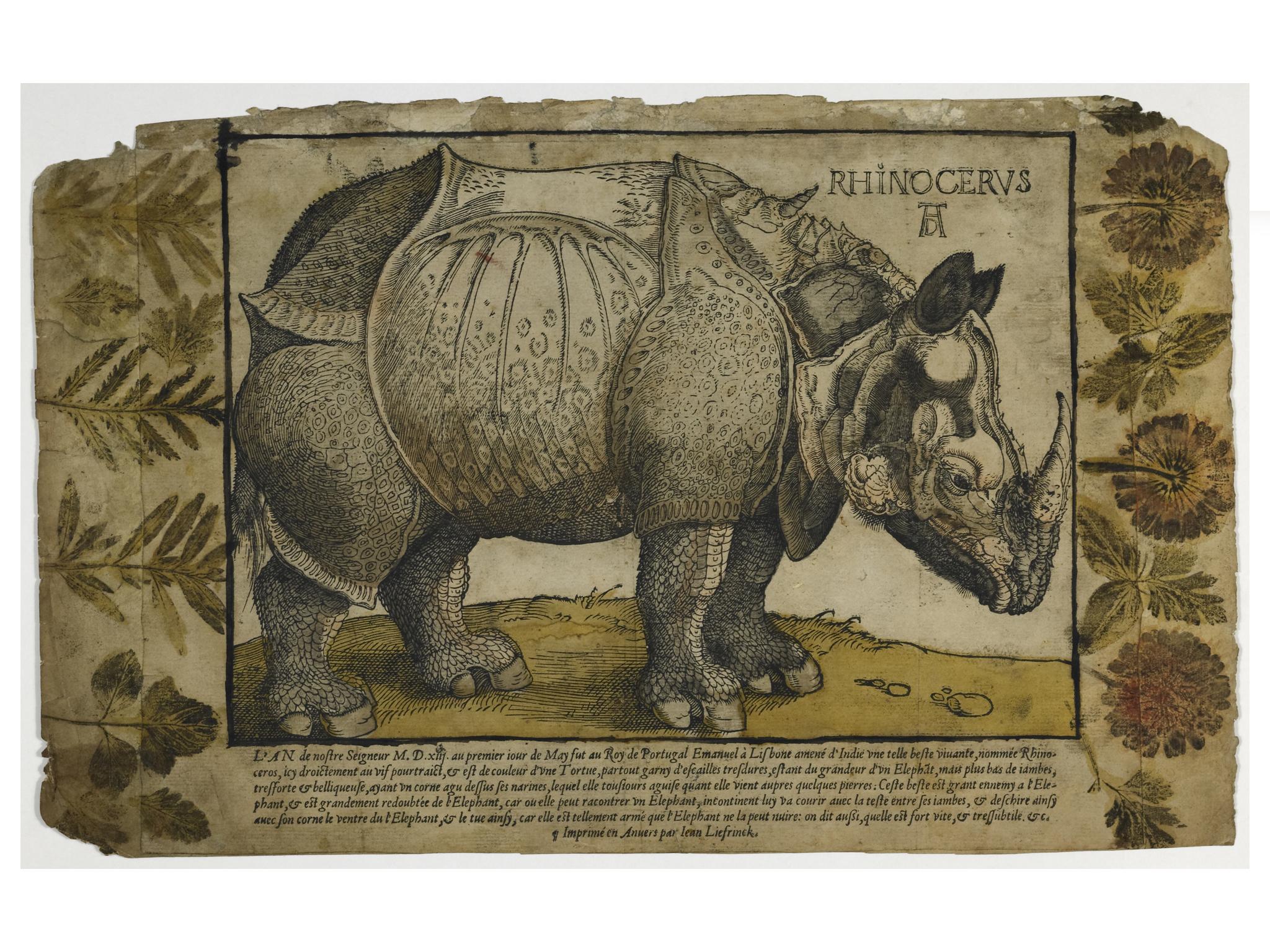 Rinoceronte, a partir de Dürer (anverso)
