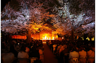 靖国神社 夜桜能