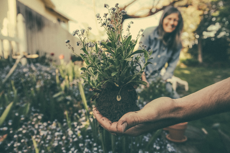 FareShare Companion Planting