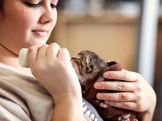 Best Friends Kitten Shower