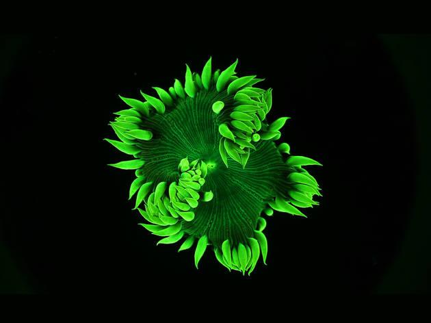 Coral Rekindling Venus 2017 Lynette Wallworth hero shot green courtesy Felix Media