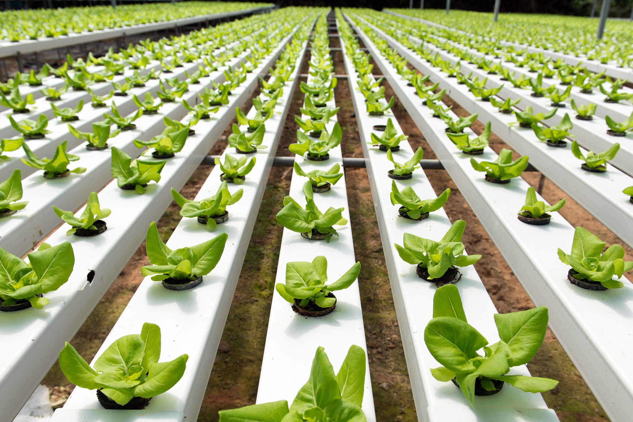 Tour a hydroponic farm in the Financial District