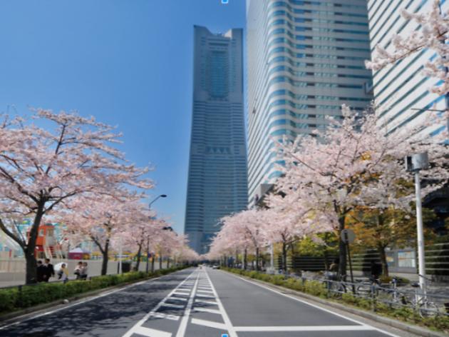 Minato Mirai Sakura Festival