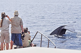 Whale watching along the Southern Coast