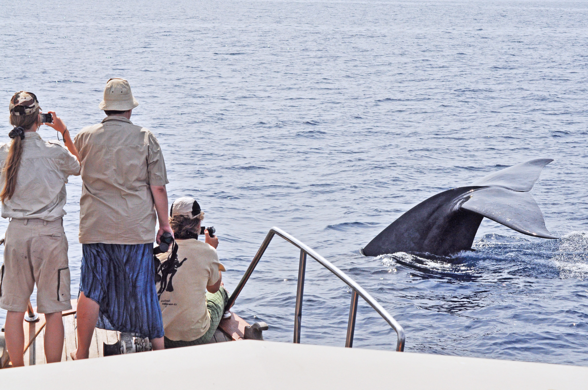 Spot Whales along the Southern Coast