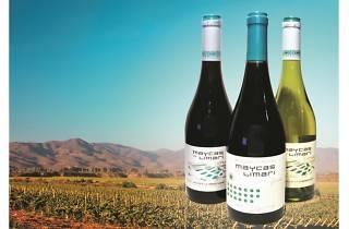 Maycas del Limari wines from Wanderwine