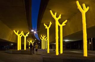 Luminous yellow trees