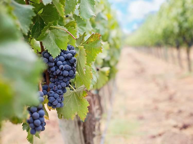 Sample the latest Dalmatian wine