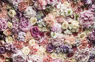 Pink Flower Wall - Augustus Bloom