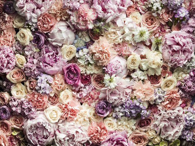 Pink Flower Wall - Augustus Bloom