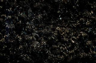 The Dark Matters (Photograph: Anna Kucera)