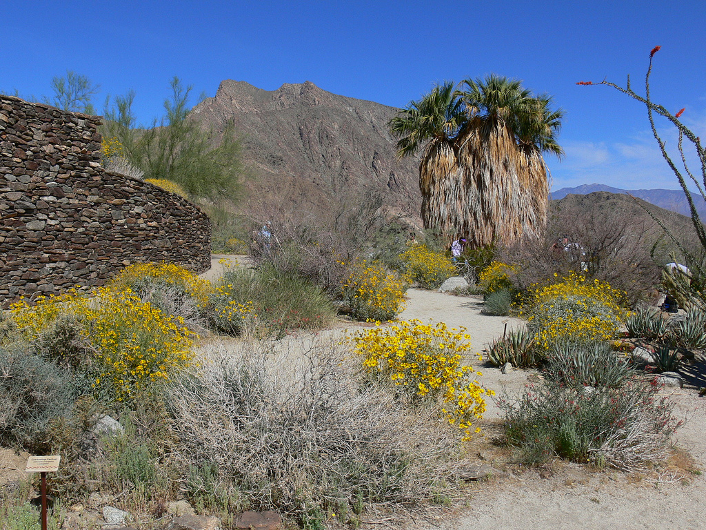 Anza Borrego Henderson Canyon Best Places To See Southern California Wildflowers