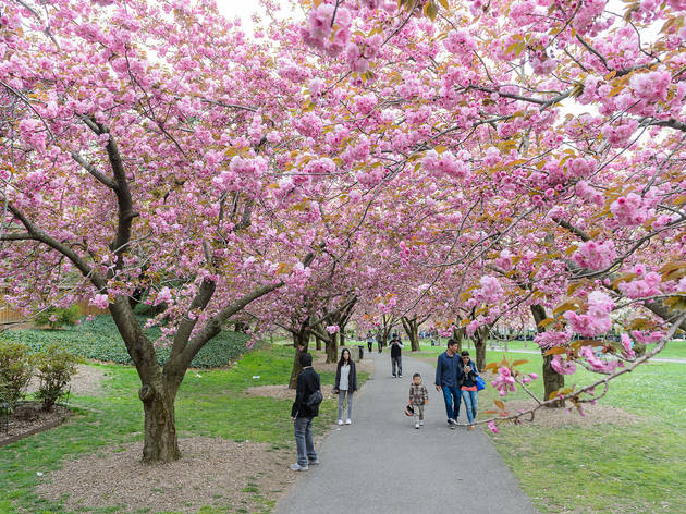 Five Places To See The Cherry Blossoms In Nyc