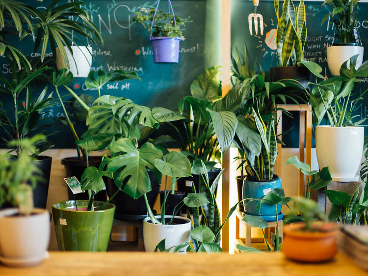Get some greenery delivered to brighten up your home