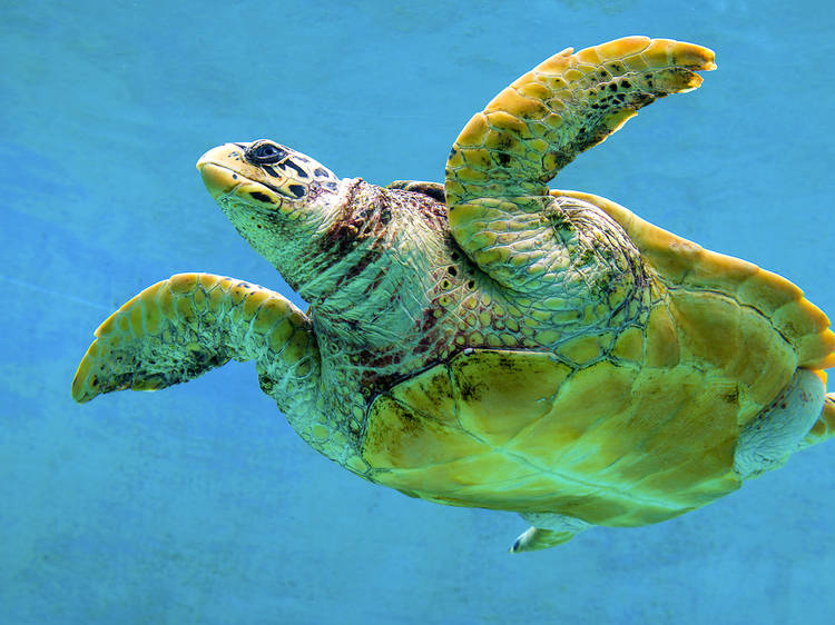 Fall in love with sea turtles...