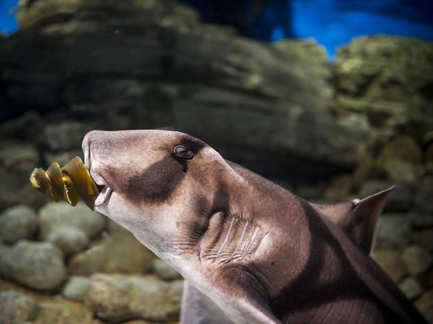 tubarão portugues jackson