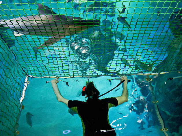 Sea Life: Snorkelling with sharks