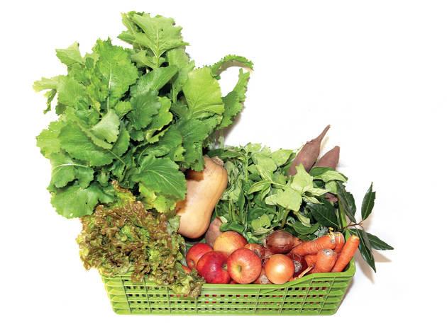 Verdejar - Cabaz de Frutas e Legumes
