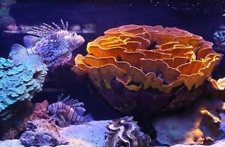 Подводный Эйлат: дайвинг на юге