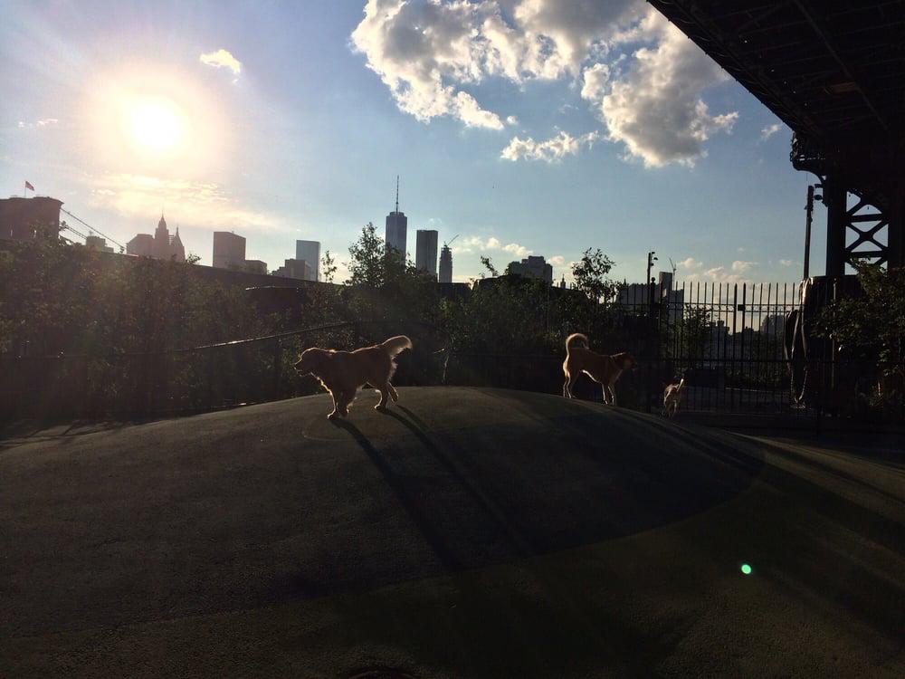 Brooklyn Bridge Park Dog Run