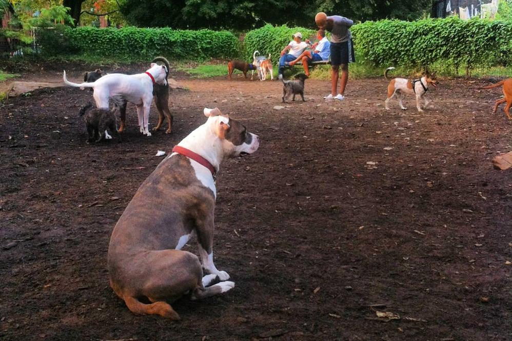 dog parks in brooklyn