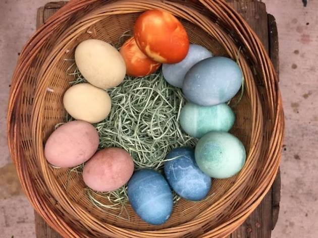 Natural Easter dyeing with the dogwood dyer