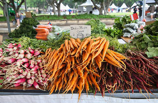 Carrots and radishes for sale at Pyrmont Market
