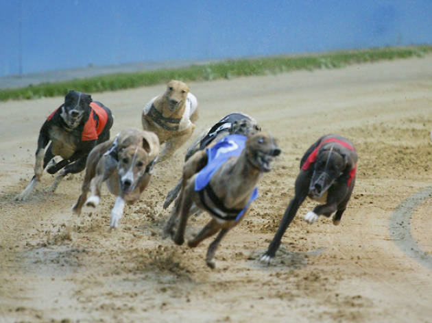 Gone to the dogs: London's last greyhound track is closing this weekend